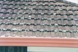 Mugg eller meldugg som vokser på taket